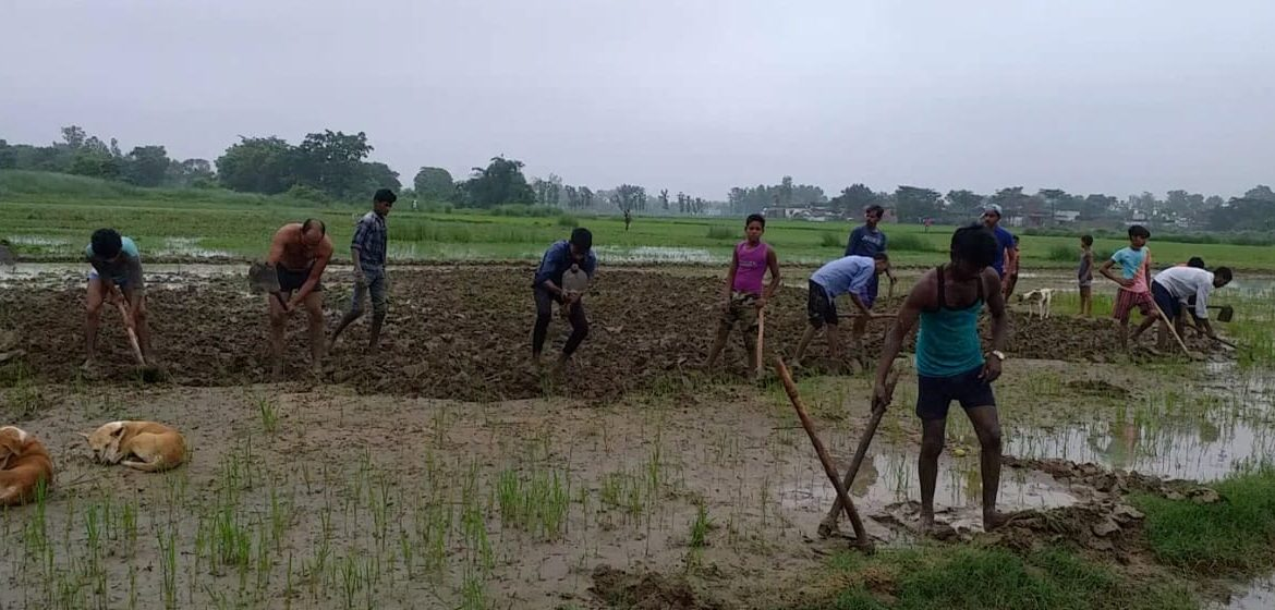If the domineering did not allow the tractor to come, then the Dalits planted paddy with a spade