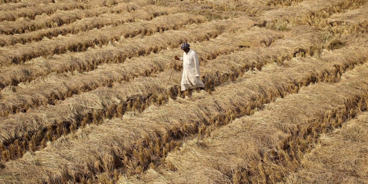Punjab: Dalit Village 'Misled' by Govt to Hand Over Panchayat Land for Industrial Park