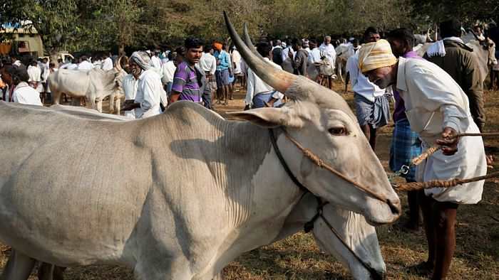Karnataka's Anti-Cow Slaughter Law: A Cattle Market Pays the Price